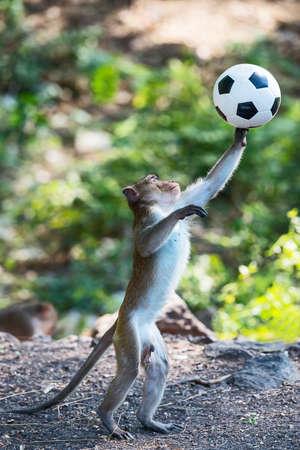 Little monkey playing soccer ball