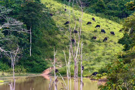 A distant view of a herd of bison on the mountain