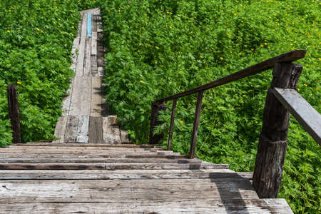Old wooden bridge in the yellow cosmos flower field Stock Photo