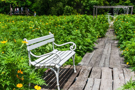 White chair in a yellow cosmos flower field