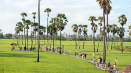 Blurred view of the palm trees in the green fields