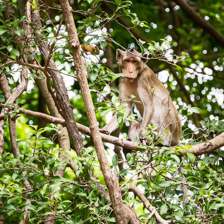 The daily lives of small monkeys, tropical forests, Thailand. 版權商用圖片