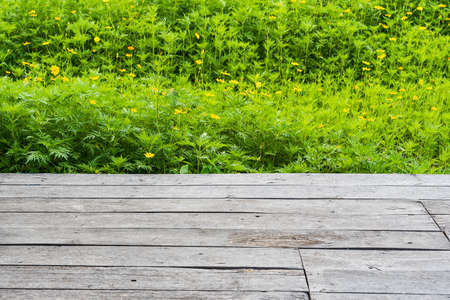Old wooden floor with yellow cosmos flower fields as a backdrop 版權商用圖片