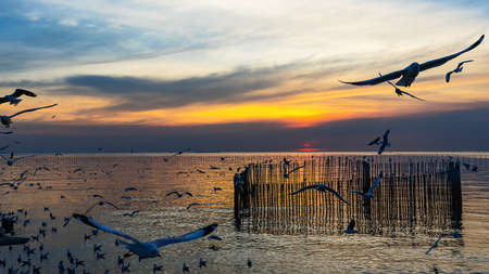Many seagulls fly in the evening sky at Bang Pu of Thailand. 版權商用圖片 - 162374057