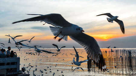 Bang Pu. Thailand. December 19 - 2020: People watched the sunset at Bang Pu, There are lots of seagulls fly, Recreation Center, Thailand.