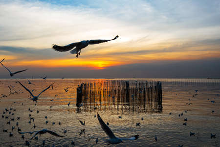 Many seagulls fly in the evening sky at Bang Pu of Thailand.
