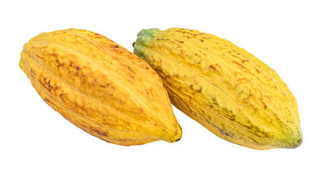 Fresh two cacao pods isolated on a white background.