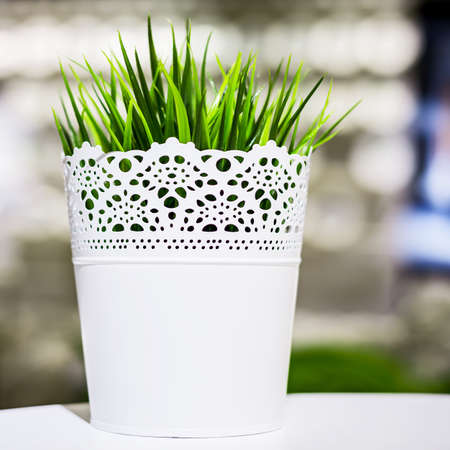 Metal grass pot for display in the office 版權商用圖片 - 163377774