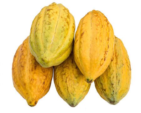Fresh three cacao pods isolated on a white background. 版權商用圖片 - 164136588