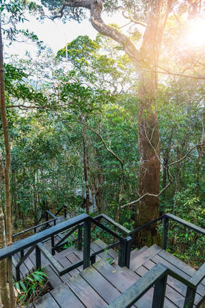 Pha Diao Dai Nature Trail, Thailand 版權商用圖片 - 163377908
