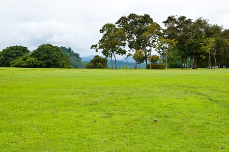 lanscape green yard in the park photo