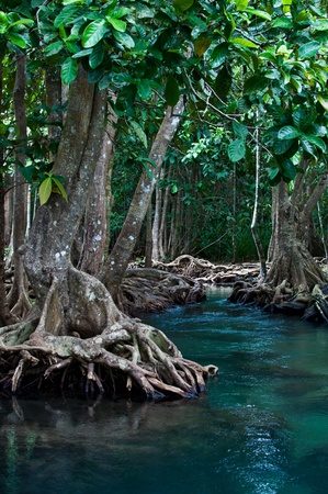 Mangrove forest and clear water canal photo
