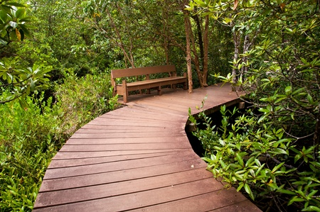 walkway wood over river and bench in mangrove forest photo