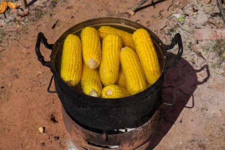 boiling: Corn boiling in pot