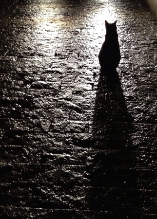 Black cat silhouetted against wet cobblestones background Stock Photo