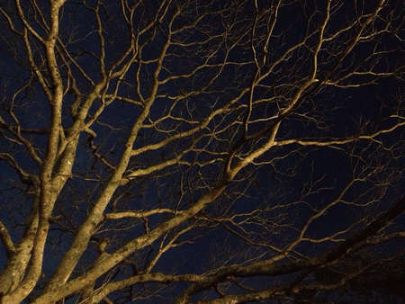 Tree branches form an organic pattern Stock Photo