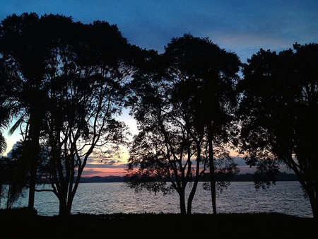 Trees by a lakeshore at sunset