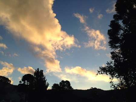 Late afternoon sky with sunlit clouds against silhouetted trees