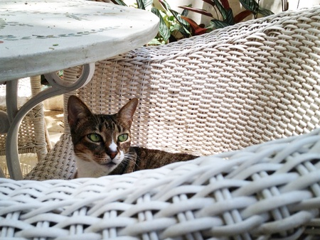 Cat lounging on the garden chair Stock Photo