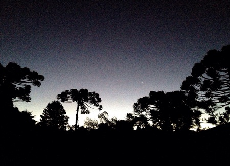 Nightfall over silhouetted trees