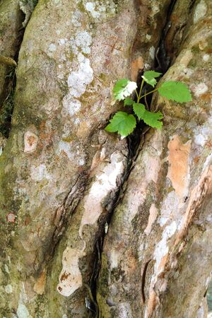 Tree trunk with green sprout