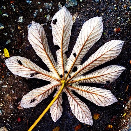 Star-shaped leaf