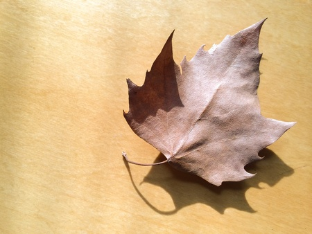 Dry maple leaf on wooden