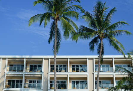 palm tree with building