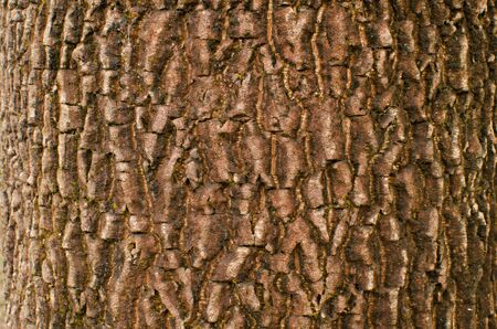 Red Tree Bark Texture