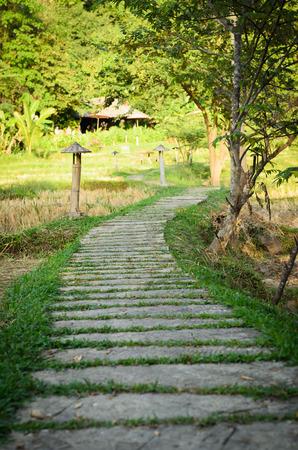Walkway in a garden  photo