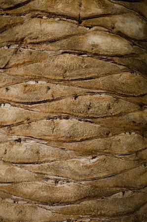 Palm tree bark texture photo