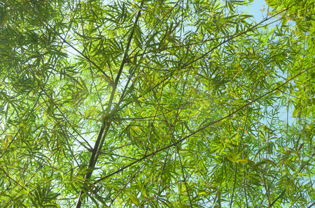 This is a bamboo in a forest Stock Photo