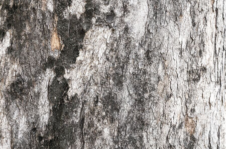 The bark of tree is design for background.