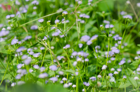 The grass flower in the forest field Stock Photo