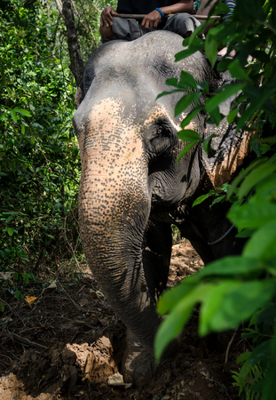 head of elephant with tourist in jungle Stock Photo