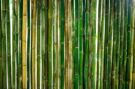 The green bamboo are making for house wall.
