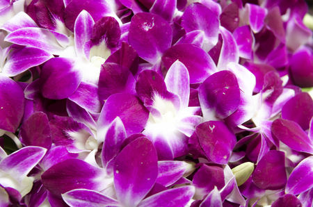 close up orchid flowers texture and background