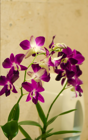 orchid flower is decoration in bathroom