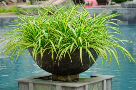 a flowerpot or jardiniere decoration at swimmingpool