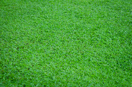 the green grass field texture and background