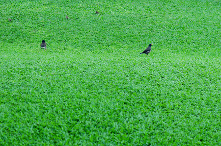 the birds are eating on grass green filed