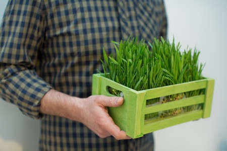 Man holding a wooden green box with fresh green grass on a white background Stock fotó
