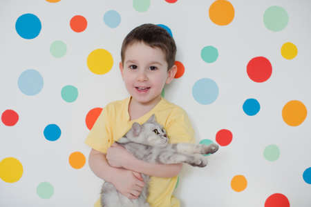 Toddler caucasian boy with gray cat on a background of wall with colorful circles