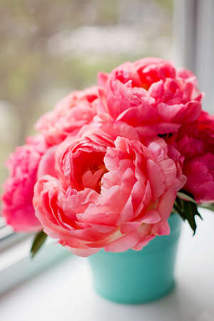Bouquet of coral peonies in mint color bucket on a windowsill