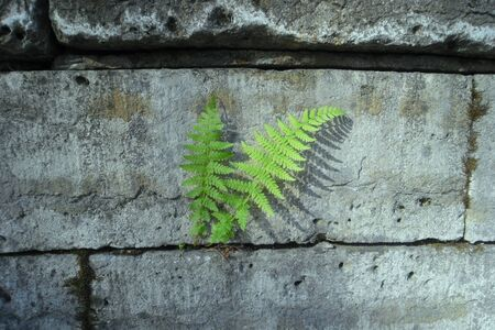 fern between the stones