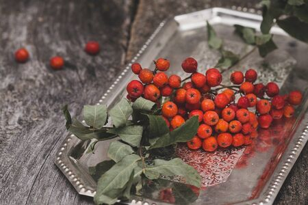 rowanberry: rowanberry on a tray on wooden background Stock Photo