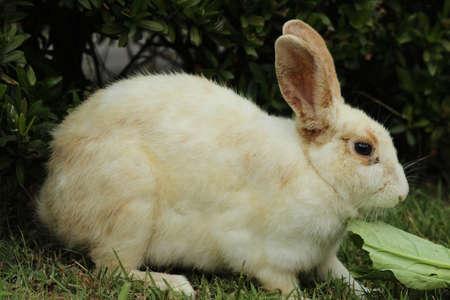 buena postura: conejo