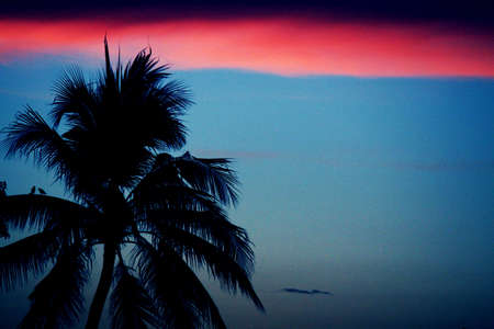The evening sky and Coconut photo