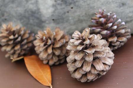 pine cone: Pigna su sfondo di legno Archivio Fotografico