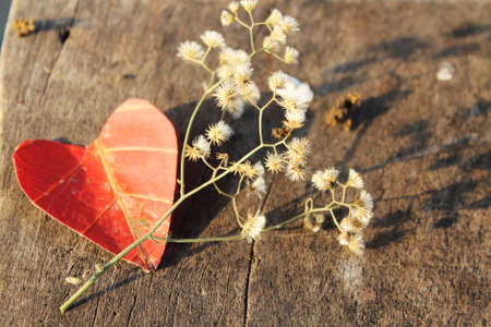 coral colored: Heart-shaped autumn leaves